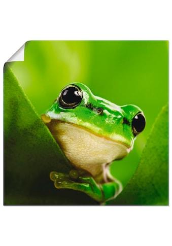 Artland Wandbild »Ausspähender Frosch«, Wassertiere, (1 St.), in vielen Grössen &... kaufen
