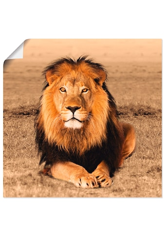 Artland Wandbild »Löwe«, Wildtiere, (1 St.), in vielen Grössen & Produktarten -... kaufen