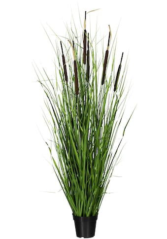 Creativ green Kunstgras »Grasbusch mit Schilfkolben« kaufen