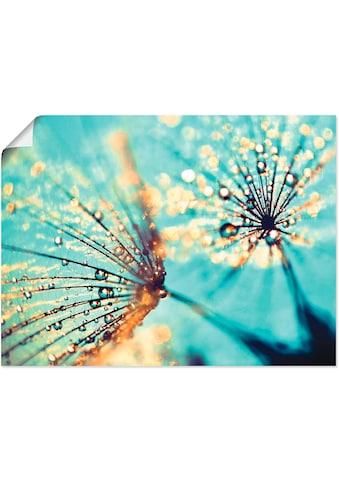 Artland Wandbild »Pusteblume aqua«, Blumen, (1 St.), in vielen Grössen & Produktarten... kaufen