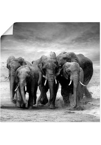Artland Wandbild »Elefanten«, Wildtiere, (1 St.), in vielen Grössen & Produktarten -... kaufen