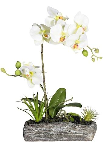 Creativ green Kunstpflanze »Phalaenopsis« (1 Stück) kaufen