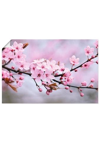 Artland Wandbild »Kirschblüten«, Blumen, (1 St.), in vielen Grössen & Produktarten -... kaufen