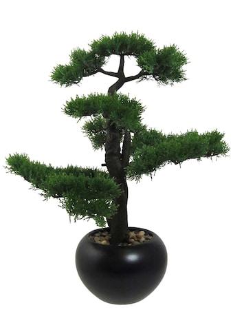 Creativ green Kunstpflanze »Bonsai Zeder«, im Keramiktopf kaufen