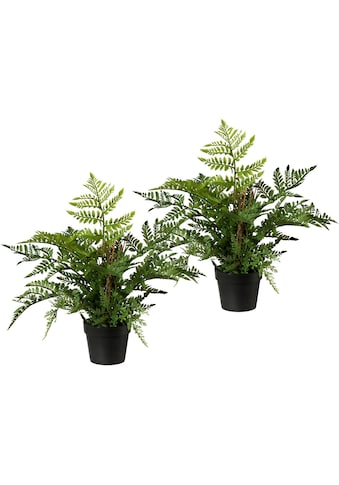 Creativ green Künstliche Zimmerpflanze (2 Stück) kaufen