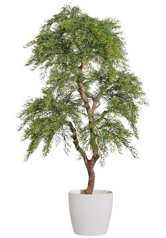 Creativ green Kunstbaum »Zypresse«, im Keramiktopf kaufen