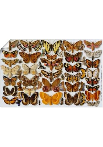 Artland Wandbild »Schmetterlinge. Porzellanmalerei. 1881«, Insekten, (1 St.), in... kaufen