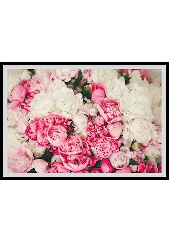 queence Bild »Ruth«, Blumen, (1 St.) kaufen