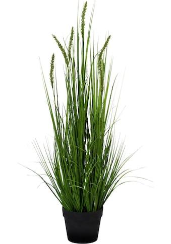 Creativ green Kunstpflanze »Penisetum« kaufen