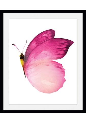 queence Bild »Judy«, Schmetterlinge, (1 St.) kaufen