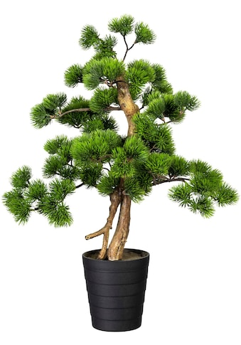 Creativ green Kunstbonsai »Bonsai Kiefer« kaufen