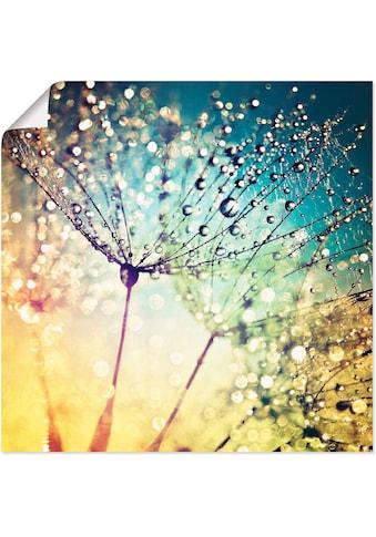Artland Wandbild »Pusteblume Zaubertropfen«, Blumen, (1 St.), in vielen Grössen &... kaufen