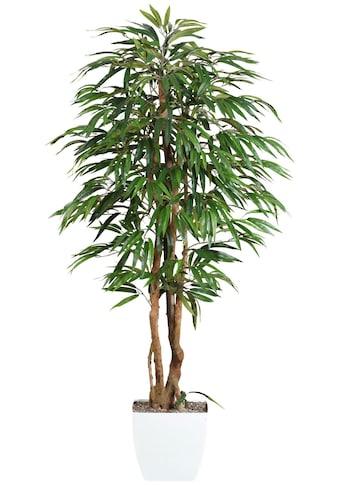 Creativ green Kunstpflanze »Weeping - Ficus« (1 Stück) kaufen