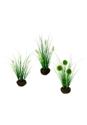 I.GE.A. Kunstpflanze (Set, 3 Stück) kaufen