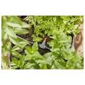 GARDENA Bewässerungssystem »Micro-Drip-System Pflanztöpfe S«, Micro-Drip-System