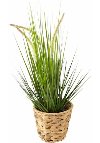 Kunstpflanze »Gras« (1 Stück) kaufen